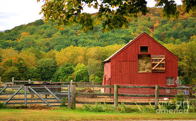 Photograph - The Old Red Barn by Kathy Baccari