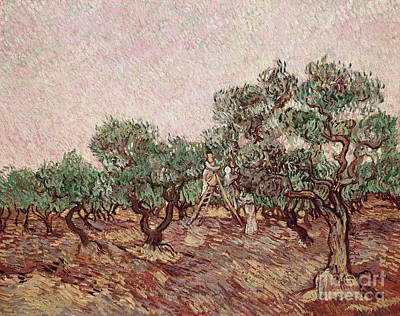 The Olive Pickers Art Print