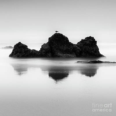Beach Royalty-Free and Rights-Managed Images - One Gull by Masako Metz