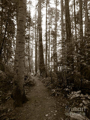 Photograph - The Path 2 by Mark Alan Perry