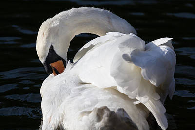 Katharine Hepburn - The Peaceful Swan by David Pyatt