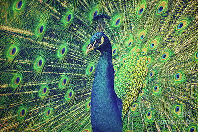 Photograph - The Peacock by Angela Doelling AD DESIGN Photo and PhotoArt