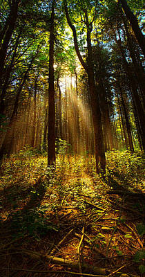 Fall Leaves Photograph - The Pines by Phil Koch
