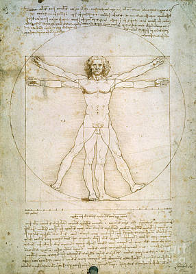 Pen Drawing - The Proportions Of The Human Figure by Leonardo da Vinci