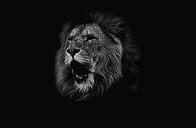 Lion Face Photograph - The Roaring Lion by Martin Newman