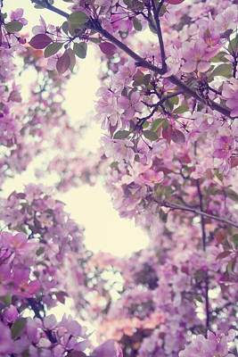 Photograph - The Scent Of Spring by Angela King-Jones