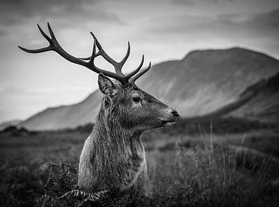 Stag Photograph - The Stag  by Mark Mc neill