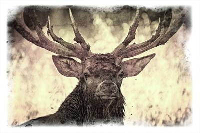 Photograph - The Stag by Michael Mogensen