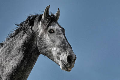 Photograph - The Stallion by Michael Mogensen