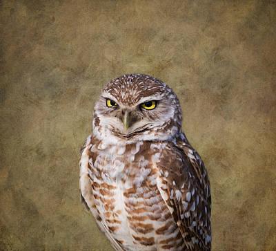 Photograph - The Stare by Kim Hojnacki