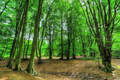 Photograph - The Summer Forest by David Pyatt