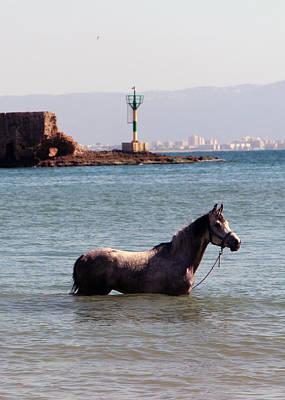 Photograph - The Swim by Munir Alawi