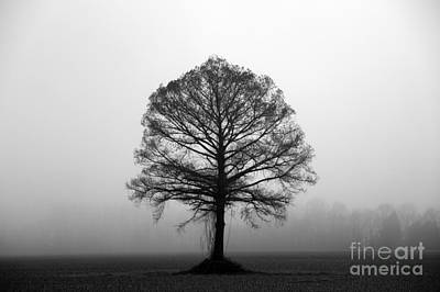 The Tree Art Print by Amanda Barcon