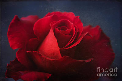 Of Roses And Love Wall Art - Photograph - The Universal Beauty by Sharon Mau