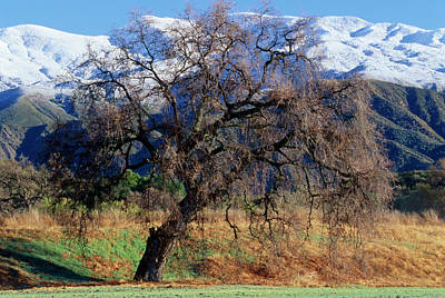 Ojai Wall Art - Photograph - The Upper Ojai Valley by Soli Deo Gloria Wilderness And Wildlife Photography