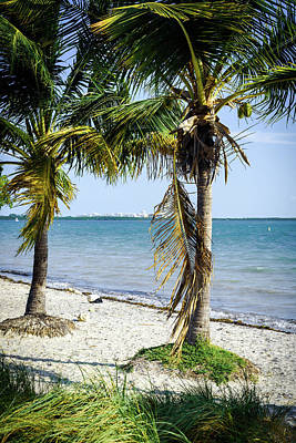 Flowers Miami Photograph - The Waters Edge by Camille Lopez