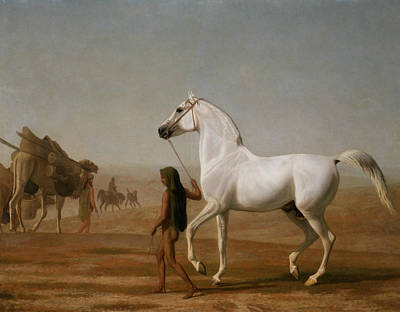 Painting - The Wellesley Grey Arabian Led Through The Desert by Jacques-Laurent Agasse