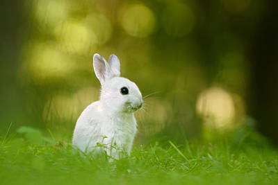 Rabbit Photograph - The White Rabbit by Roeselien Raimond