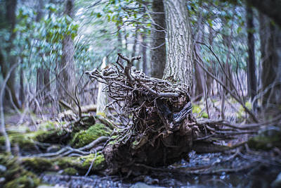 Photograph - The Wild Forest In Pennsylvania, Poconos by Alex Potemkin