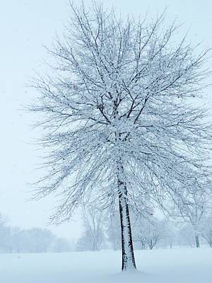 Photograph - The Winter Tree  by Lori Frisch