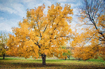 Photograph - The Yellow Tree by Victor Culpepper