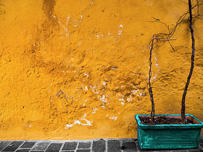 Photograph - The Yellow Wall by Rae Tucker