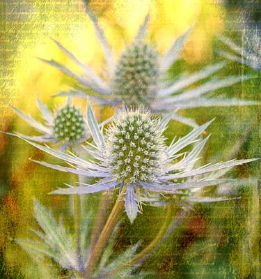 Floral Digital Art Digital Art Digital Art - Thistle by Cathie Tyler