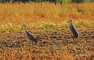 Photograph - Three Amigos  by Robert Bales