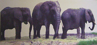 Photograph - Three Elephants by Merton Allen
