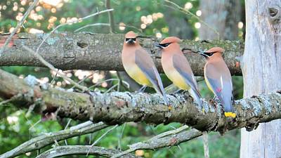Photograph - Three In A Row by Jeanette Oberholtzer