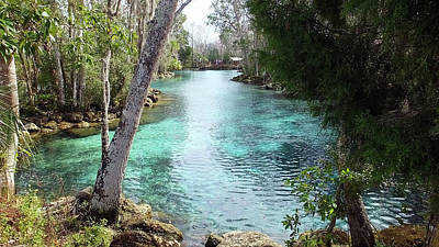 Photograph - View From Spring 3 To Spring 2 At Three Sisters Springs by Judy Wanamaker