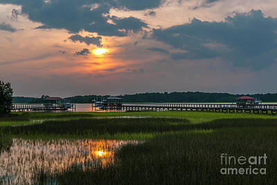 Photograph - Thriving Beauty Of The Lowcountry by Dale Powell