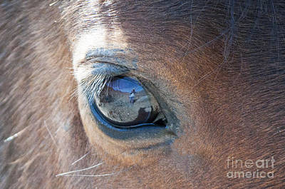 Photograph - Through His Eye by Lula Adams