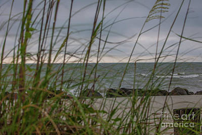 Photograph - Through The Sea Grass by Dale Powell