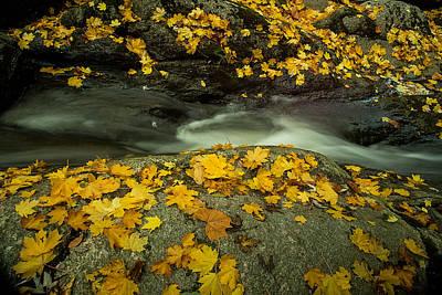 Photograph - Tiber Creek - Ellicott City by Dana Sohr
