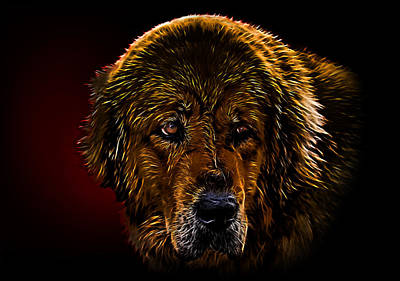 Mets Mixed Media - Tibetan Mastiff by Denis Bajan