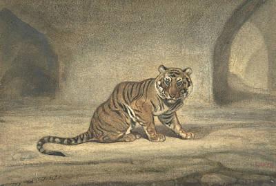 Drawing - Tiger by Antoine-Louis Barye