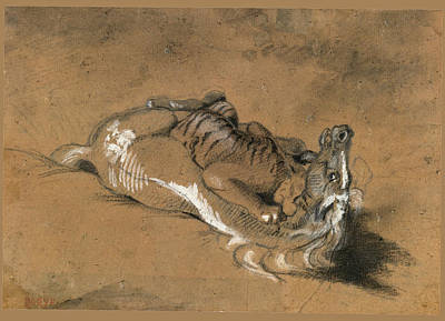 Tiger Attacks A Horse Drawing - Tiger Attacking A Horse by Antoine-Louis Barye
