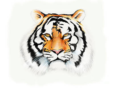 Drawing - Tiger by Brian Gibbs