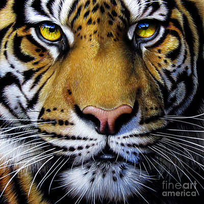 Tiger Painting - Tiger  by Jurek Zamoyski