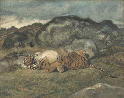 Drawing - Tiger Rolling On Its Back by Antoine-Louis Barye