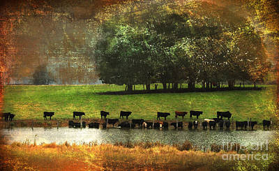 Photograph - Till The Cows Come Home by Olivia Hardwicke