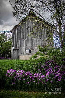 Photograph - Timeless  by Viviana  Nadowski