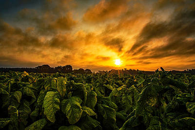 Photograph - Tobacco Sunrise  by John Harding