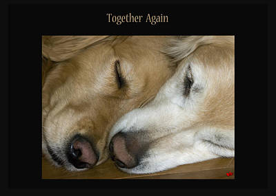 Photograph - Together Again by Rhonda McDougall