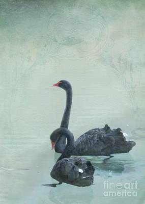 Swan Mixed Media - Black Swans by Cindy Garber Iverson