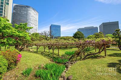 Photograph - Tokyo Sakura Spring by Benny Marty