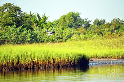 Digital Art - Blue Heron In Topsail Island Marshland by Eva Kaufman