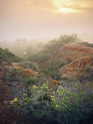 Photograph - Torrey Pines And Foggy Sunset by Alexander Kunz