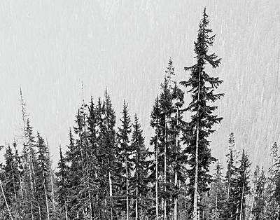 Pucker Up - Towering Trees by Julie Craig